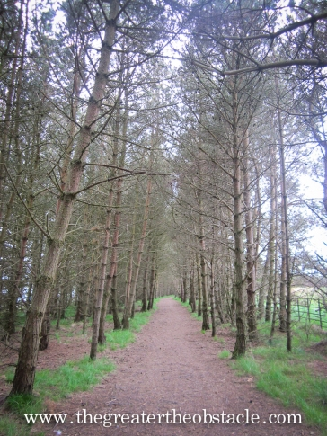 Tree lined avenue Scottish style.